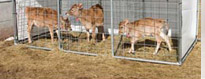 Animal Housing & Kennels